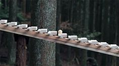 Japanese Gravity Marimba Plays Bach In An Ancient Forest Wooden Ramp, Musical, The Incredibles, Cool Stuff, Interesting Stuff, How To Make, Crafts, Things To Sell, Plays