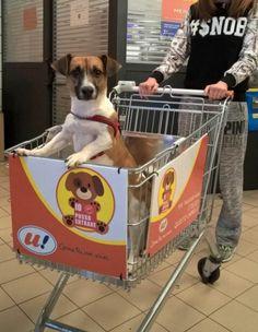 En Italie, vous pouvez désormais faire vos courses avec votre chien, dans votre caddie!