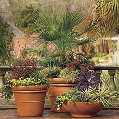 Love, love, love container gardening! Must plant some palms in big containers for the entrance way.