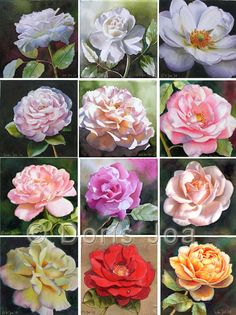 Collection of painted roses - learn how to paint a rose, how to paint roses in watercolor