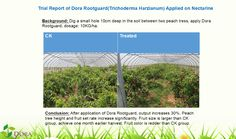 Dora Rootguard the Best Partner of Humic Acids   One plus one is much greater than two (1+1>2)  Both of humic acids and trichoderma harzianum are environmental friendly and follow international trend in the field.  More info:http://www.doraagri.com/humic-partner/