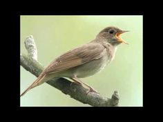 Релакс. Звуки вечернего леса,Слушать перед сном. // Sounds of Nature - YouTube