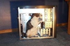Funny cats (50 pics) -