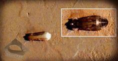 Navegação de nave mãe extraterrestre em Marte