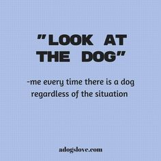 be prepared for that it can be any situation but if i spot a dog you need to see it too