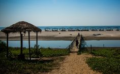 Mandrem Beach Goa