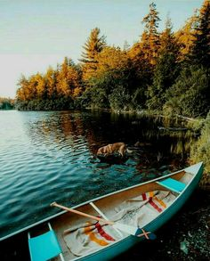 [[MORE]] Brief moments of silence and serenity - 🌍Plainfield, Massachusetts - 📸Huck Blue Canoe, Canoe And Kayak, Canoe Trip, Summer Nature Photography, Travel Photography, Adventure Awaits, Adventure Travel, Adventure Holiday, Free People