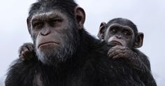 War for the Planet of the Apes Featurette Explores Caesar's Legacy -- Relive the journey from the very beginning as a new Planet of the Apes 3 sneak peek traces the entire trilogy. -- http://movieweb.com/war-for-planet-of-apes-featurette-caesar-legacy/
