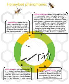 Winter studies: The social network of honeybees