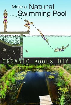 Natural Swimming Pools are kept clean by plants, not chemicals and are healthy environments for both people and wildlife. This film is a guide to making your own. David… backyard diy Watch Make a Natural Swimming Pool Online Swimming Pool Pond, Natural Swimming Ponds, Natural Pond, Ponds Backyard, Backyard Landscaping, Outdoor Fish Ponds, Landscaping Ideas, Ideas De Piscina, Piscine Diy