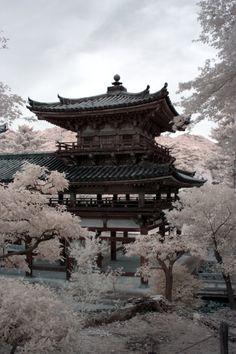 自然; Byodo-in; Kyoto