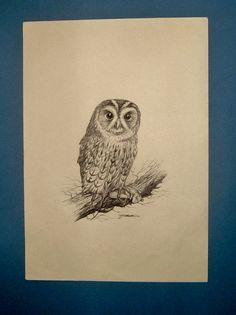 Vintage Ink Sketch an Owl Signed N F Shenton by QueensParkVintage, $45.00