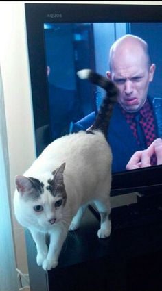 6th Hilarious Photo That Prove Perfect Timing Is Everything