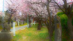spring shrine scene by Tim Ernst on 500px