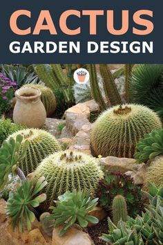 Planning a cactus garden is not for the faint of heart; it's important to have a place where the plants can be ignored for the times that they're out of bloom, with maybe the odd visit, and close enough that they will be noticed when flowering. #cactusgarden #gardendesign #cactusplants Succulent Landscaping, Succulent Gardening, Landscaping Tips, Indoor Cactus Garden, Moss Garden, Cacti And Succulents, Cactus Plants, Drought Tolerant Plants, Outdoor Gardens