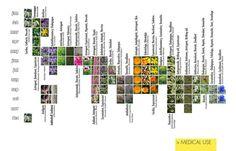 medicinal garden design - Novartis Campus