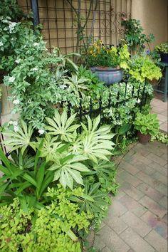 最低気温15.4度。最高気温28.2度。晴れ。もうしばらく、まったく雨が降ってません。庭も畑も水やり必須の日々。 そろそろまとめて雨が降ってほしい。でもチ... Small Backyard Gardens, Small Space Gardening, Back Gardens, Garden Shrubs, Shade Garden, Garden Landscaping, Japanese Garden Landscape, Japanese Gardens, Garden Photos