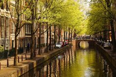 Picture of Green canal in Amsterdam against red tulips, Holland stock photo, images and stock photography. Tulips Holland, Red Tulips, Delft, Netherlands, Amsterdam, Places To Go, Europe, Stock Photos, Green