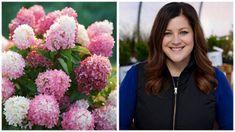 Best tips and tricks about organic gardening Hydrangea Varieties, Hydrangea Shrub, Limelight Hydrangea, Peonies And Hydrangeas, Hydrangea Care, Hydrangea Flower, Lilacs, Quick Fire Hydrangea, Incrediball Hydrangea