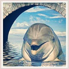 Funny Animal Images For Whatsapp Funny Animal Images, Funny Animals, Animals Images, Beautiful Sea Creatures, Animals Beautiful, Orcas, Water Animals, Animals And Pets, Dolphin Photos