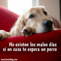 No existen los malos días si en casa te espera un #perro. Lo mejor de los viernes es pasar el fin de semana juntos