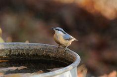 small bird near water tank