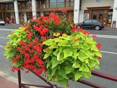 Composition estivale rouge vif et vert acidulé http://www.pariscotejardin.fr/2015/08/composition-estivale-rouge-vif_et-vert-acidule/