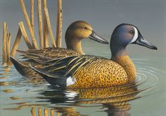 2015 Federal Duck Stamp Contest Entry 151