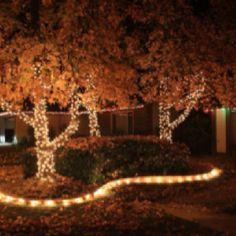Christmas lights in tree