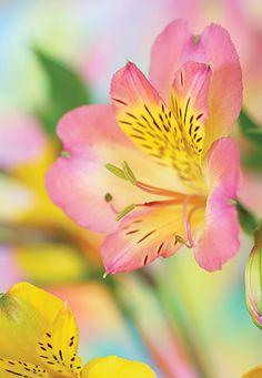 Garden Planner: March - San Diego Home & Garden - March 2015