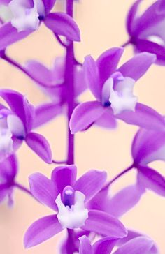 Pantone color of the year for 2014.... Radiant Orchid!!!! Beautiful Spring and Summer color!!!