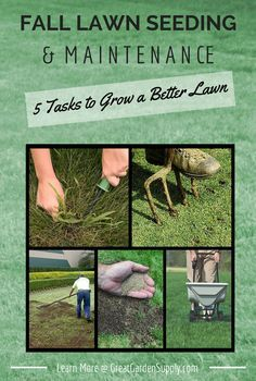 Lawn Care Tasks for the Fall - Guide to Fall Seeding, Weeding, Top-Dressing, Aerating, Fertilizing & Removing Thatch #lawn_care