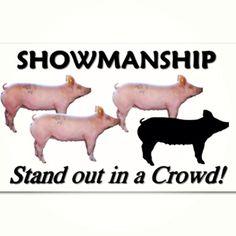 Showmanship, show pigs, stock shows