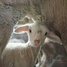 And my sheep shall know my voice...Jesus.