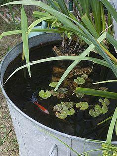 Stunning Water Features You Can Make In A Day - Container Water Gardens Small Garden, Garden Design, Plants, Container Water Gardens, Vegetation, Front Garden, Garden Gifts, Vertical Garden, Vintage Garden Decor