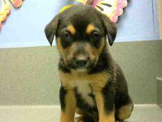 www.PetHarbor.com pet:MRVL.A446445