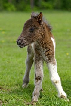 I come from the New Forest in the UK where the Forest ponies are free.  I love it when the foals are born.