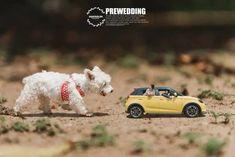 Khontuelek Photography - Google 搜尋 Toys, Google, Animals, Animais, Animales, Animaux, Toy, Animal, Games