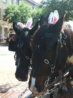 Another horse-drawn carriage option