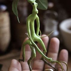 Bowtruckle/Tronquilho - Fantastic Beasts And Where To Find Them