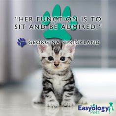Kitties know their place.   #ShareYourKitty #EasyologyPets #KittyQuotes