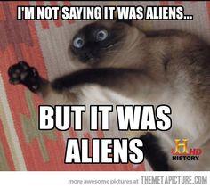 Conspiracy kitty