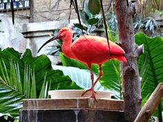 A Tropical Adventure at Bird Kingdom in Niagara Falls, Ontario