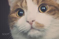 Excuse me! https://500px.com/photo/130048591/-f%C3%BCrchtet-mich-wenn-ihr-es-wagt-by-robert-iser #cats