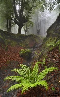 Spring Ferns in the forest Foto Nature, All Nature, Amazing Nature, Beautiful World, Beautiful Places, Beautiful Pictures, Landscape Photography, Nature Photography, Photos Voyages