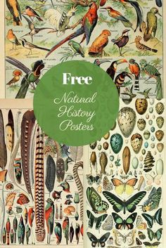 This is a fabulous free printable collection of natural history posters. More specifically, birds, insects and butterfly posters by Adolphe Millot. #freeprintable #naturalhistory Vintage Botanical Prints, Vintage Maps, Vintage Prints, Vintage Posters, Botanical Drawings, Vintage Diy, Vogue Vintage, Decor Vintage, Design Vintage