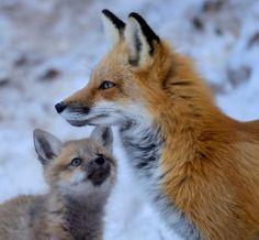 beautiful-wildlife:  Luv You MommybyJose Albero