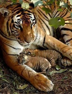 Resting with my cub.