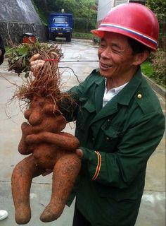 Two Chinese farmers got more than they bargained for when they pulled up the root of a fleece flower – and came face-to-face with the doppelganger of Homer Simpson, on May 17, 2013. The large root appears to have two bulging eyes and a prominent nose – giving it an uncanny resemblance to the famous cartoon character. With two offshoot roots shaped like arms, it even looks like it is pondering or confused – just what you would expect from the real Homer. (Photo by ImagineChina)