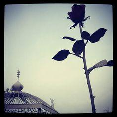 Roppongi Rose
